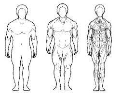 питание мезоморфа для похудения женщинам