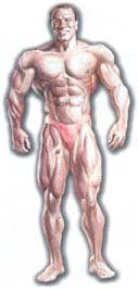 Мезоморф питание,программы тренировок.
