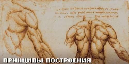Принципы построения СИЛОВОЙ ТРЕНИРОВКИ