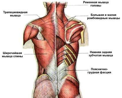Упражнения для укрепления мышц спины при сколиозе